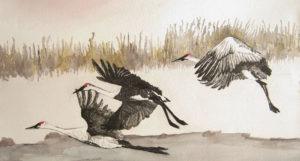 Sandhill Cranes by Sharon l Graham, Watercolor, 30in x 17 in, original $500, print $300